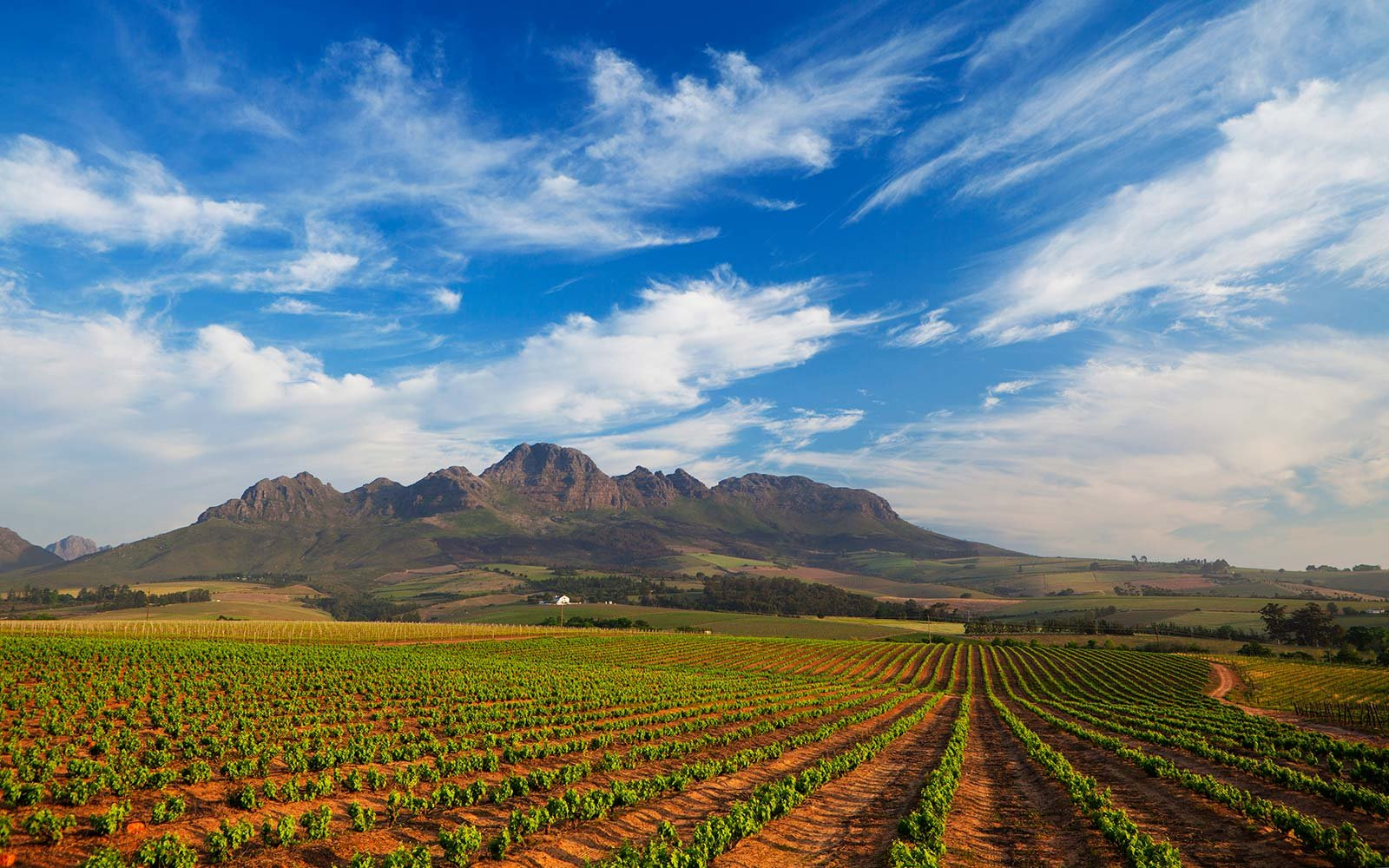 Landscape photo of vineyards in the Stellenbosch area. Stellenbosch, Western Cape, South Africa