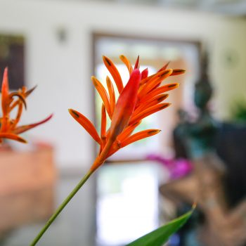 Orange flowers in foreground, in the back is a living room