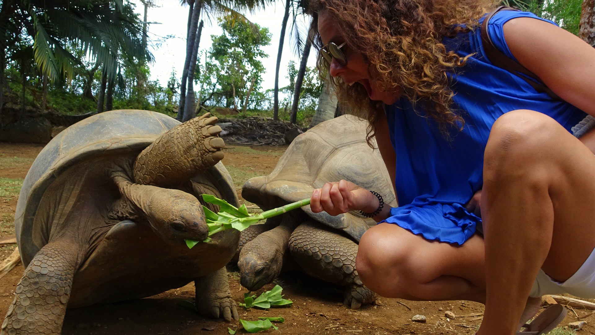 Feeding Giant Turtles, Walking With Lions… Oh the Things I Did To Get Here